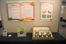 絵本『おはぎちゃん』「お話に出てくる〝ミヤビ チョウコさん″は、どの種類のアゲハチョウでしょうか?」